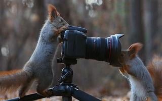 Şedinţă foto cu nişte veveriţe jucăuşe. Sunt simpatice foc!