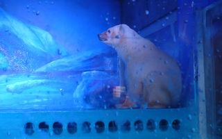 VIDEO: Cel mai trist urs polar din lume. Un milion de oameni cer eliberarea lui