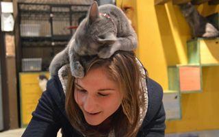 15 pisici haioase care nu înţeleg ideea de spaţiu personal