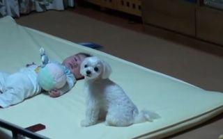 Reacţia genială a unui câine atunci când bebeluşul plânge - VIDEO