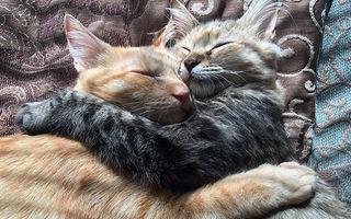 Dragostea nu are limite. Aceste două pisici nu se pot dezlipi una de cealaltă