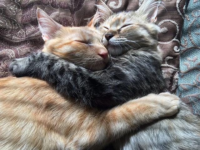 Două pisici de nedespărţit