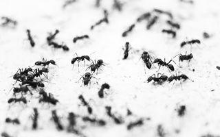 Cum scapi de furnicile din casă