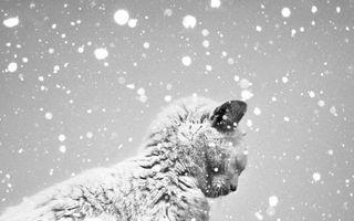 15 fotografii alb-negru care te vor emoţiona până la lacrimi