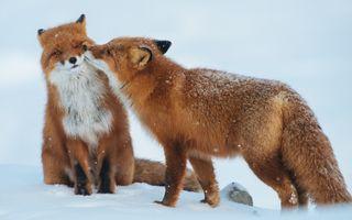 Dragostea e peste tot: 15 imagini amuzante cu momentele de tandreţe ale animalelor