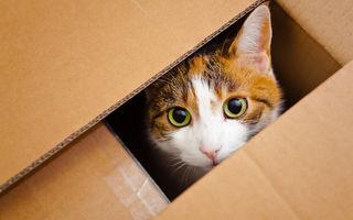 De ce se bagă pisicile în cutii?