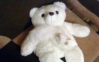 30 de pisici perfect camuflate. Tu le găsești?