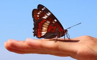 Ce nu știai despre fluturi
