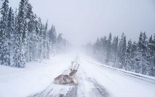 Laponia, destinaţia perfectă pentru un Crăciun de poveste. 30 de imagini uimitoare