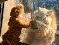 VIDEO: Ce face un leu când vede un băieţel în costum de leu