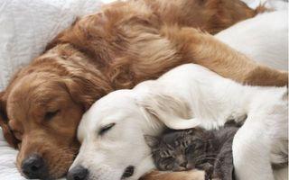 Adevărul despre câini şi pisici: Dorm împreună ca nişte copii! - VIDEO