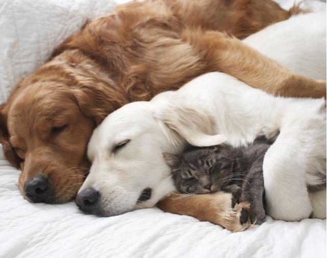 câini pisici
