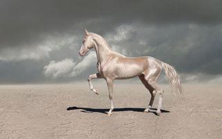 Un cal putere, dar metalizat: Acesta e cel mai frumos armăsar din lume