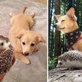 Cei mai buni prieteni: Imagini amuzante cu animale care au crescut împreună