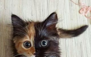 Pisica cu două feţe face senzaţie pe internet