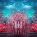 Lumea în infraroşu: Imaginile care schimbă modul în care percepi realitatea