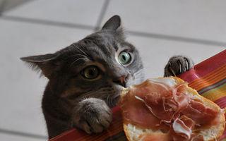 Prinse în flagrant. 35 de imagini haioase cu pisici care fură mâncarea