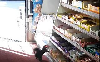 Au furat 5 ani dulciuri din magazin. Patronii au fost uimiţi când au văzut cine le golea raftul - VIDEO