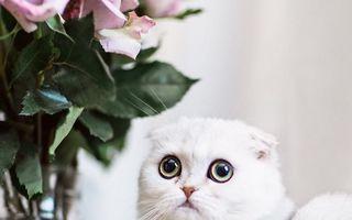 Maisey, cea mai ruşinoasă pisică din lume - FOTO