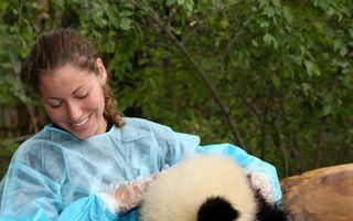 Cel mai bun job din lume: Te joci cu urşii Panda!