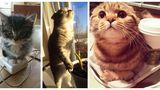 Şi ele tânjesc după căldură! 30 de imagini cu pisici adorabile