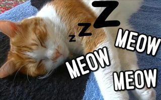"""O pisică, filmată în timp ce """"vorbeşte"""" în somn - VIDEO"""