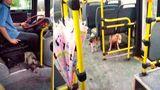 Gestul unui şofer de autobuz când a văzut doi câini tremurând în ploaie - FOTO