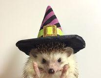 Jos pălăria, domnule arici! Cele mai amuzante imagini cu animăluţul ţepos