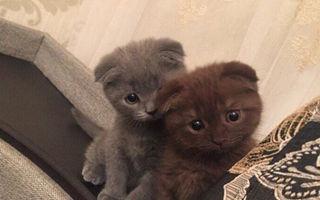Ele sunt cele mai adorabile pisici din lume!