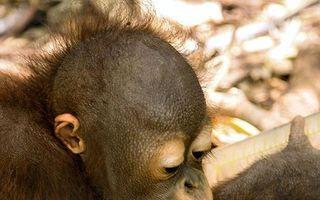 Cum arată Ziua Îndrăgostiţilor în lumea animalelor: 14 imagini amuzante