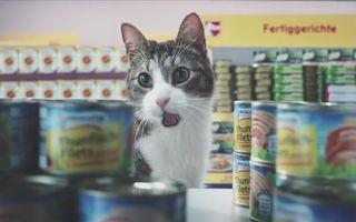 Cum ar fi dacă pisicile ar merge la supermarket? Cea mai tare reclamă cu pisici