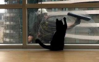 Cum reacţionează o pisică atunci când vede un alpinist utilitar la geam - VIDEO