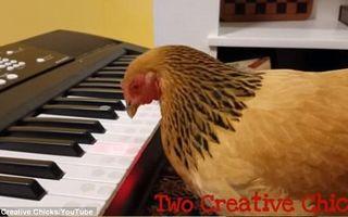 Ai mai pomenit aşa ceva? O găină cântă la pian - VIDEO