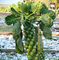 Cum arată fructele şi legumele înainte de a fi recoltate. 30 de imagini surprinzătoare