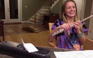 Ce face un câine exasperat de sunetul unui flaut: Are şi el răbdarea lui! - VIDEO