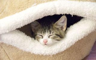Academia de mâţe: Primul canal live non-stop cu pisici - VIDEO