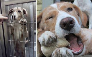15 fotografii cu animale înainte şi după ce au fost salvate. Te vor emoţiona!