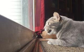 Pisica stă cu ochii pe păsări: De ce a devenit viral acest clip
