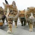 Şi animalele au gaşca lor! 30 de imagini care te vor face să râzi în hohote