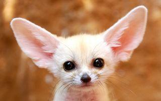 15 animale incredibil de drăguţe. Faţa lor spune totul!