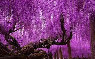 14 copaci impresionanţi care par din altă lume