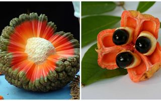 Cum arată cele mai ciudate fructe şi legume din lume. 20 de imagini fascinante