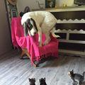 Reacţiile animalelor atunci când văd ceva pentru prima dată. 50 de imagini amuzante