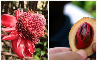 Alimente pe care le consumi, dar nu ştii cum arată în natură! Imagini care te vor surprinde