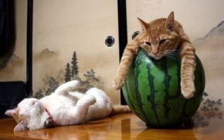 Cele mai leneşe pisici din lume. 20 de imagini care ne arată ce înseamnă relaxarea totală