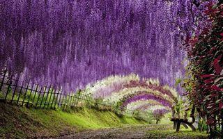 Tunelul de flori din Japonia. 15 imagini care te lasă fără cuvinte