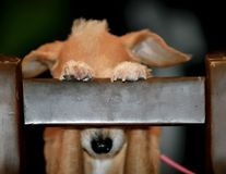19 căţeluşi care cred că au găsit ascunzătoarea perfectă. Vei râde cu lacrimi!