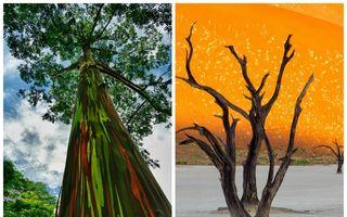 Fenomene ale naturii care ne uimesc. Imagini spectaculoase!