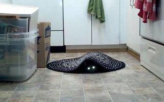 25 de imagini amuzante care demonstrează că pisicile pot fi diabolice