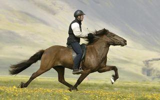 Aventură fără frână: Ce faci când calul nu se mai opreşte - VIDEO